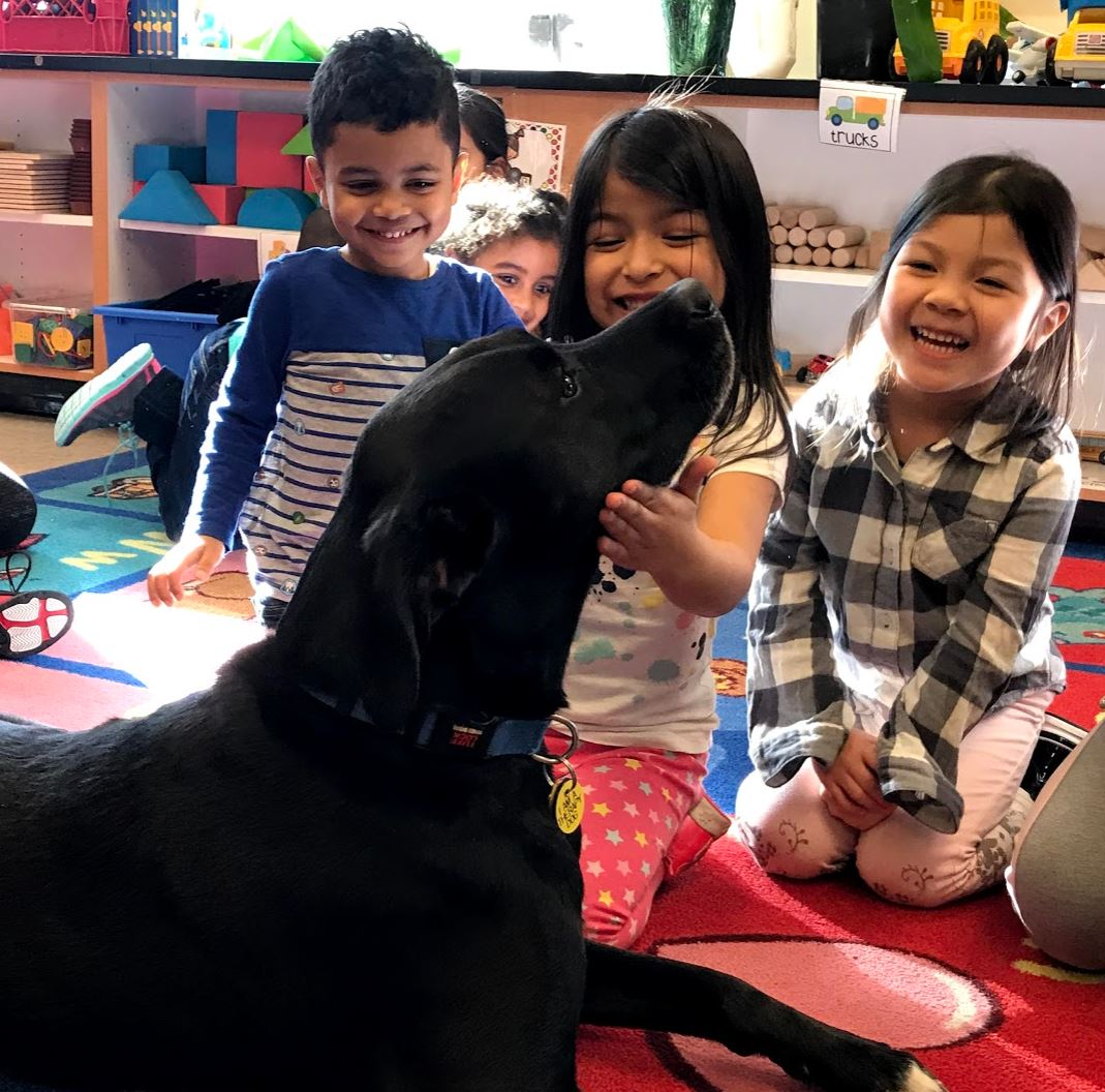 Thumbnail for Cody the Therapy Dog is a Member of the GAMS Family!