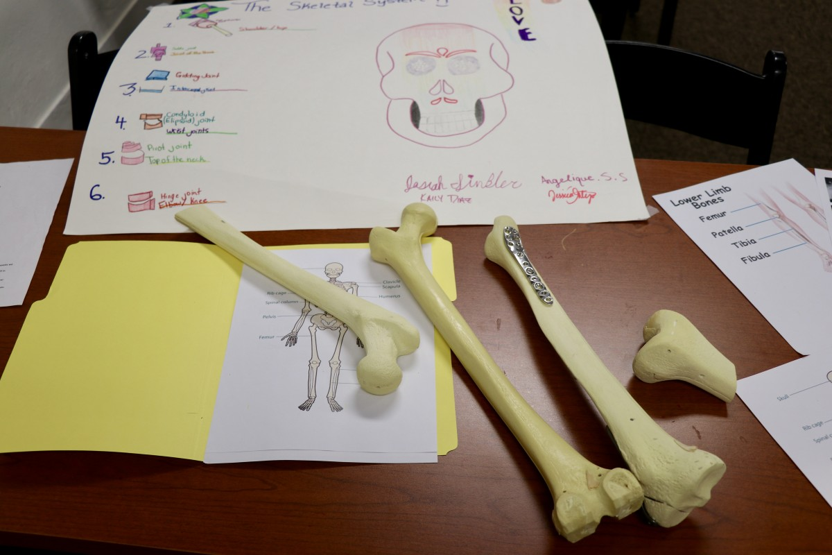 Surgical bones are used for students to learn and practice