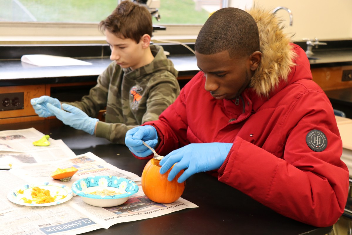 Students dissecting a pumpkin.
