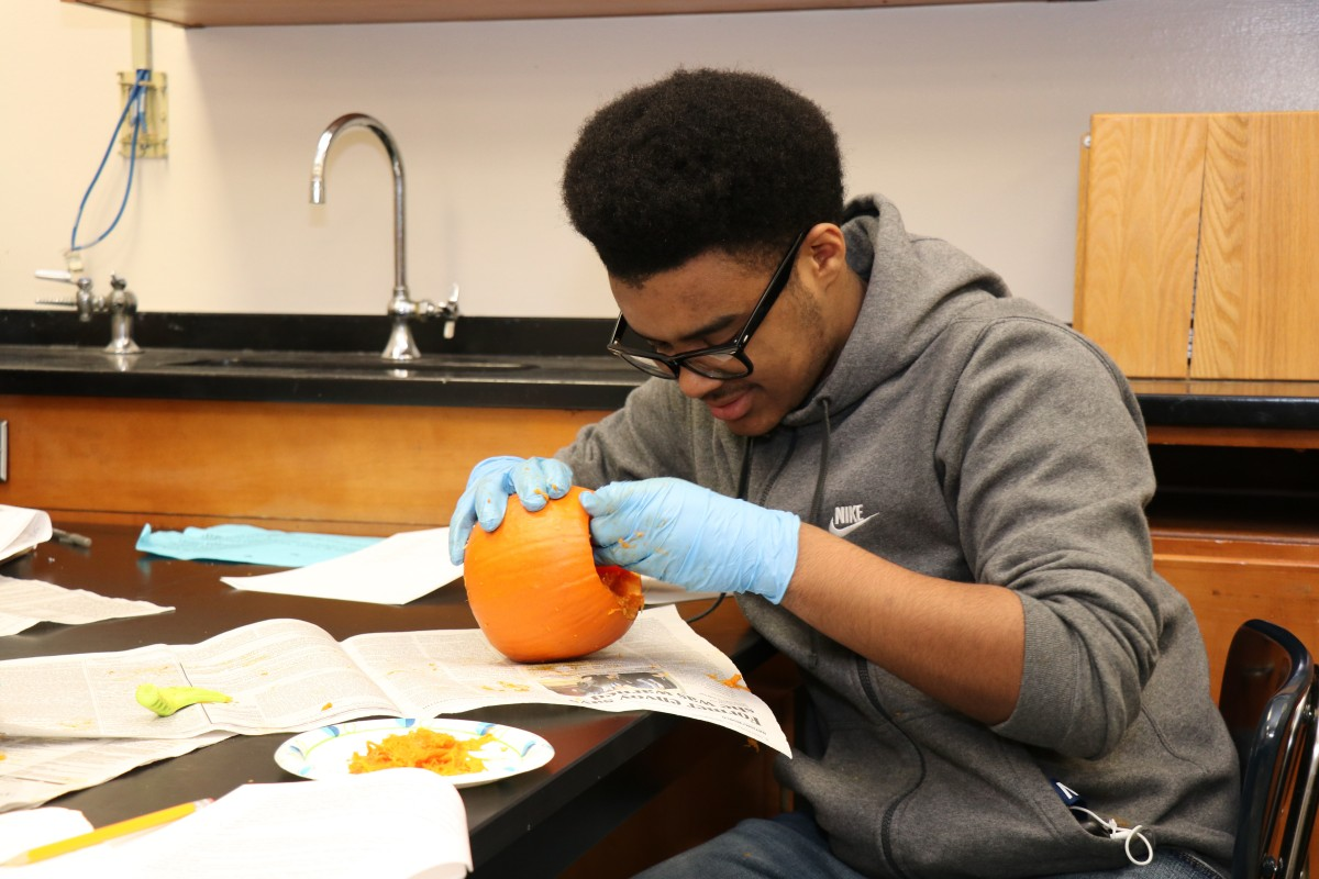 Student dissecting a pumpkin.